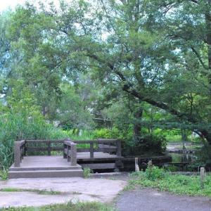 石神井公園  小川が流れる湿地帯の木道を歩く  3