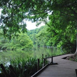 石神井公園  池に映る快晴の空  4