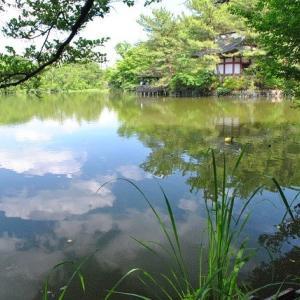石神井公園  三宝寺池ドクダミが一面に咲く道  6