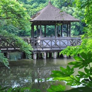 石神井公園  池に張り出した三宝寺池厳島神社の休憩所  7