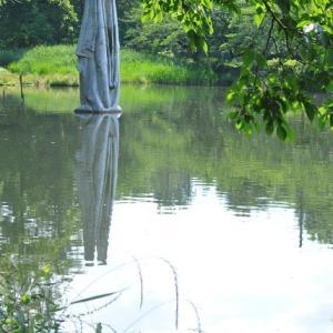 石神井公園  ラクウショウの気根が出ています   13