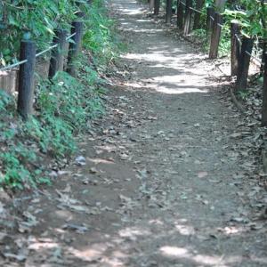 自然教育園の細い道と沼地   6