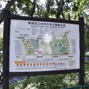 新宿界隈散歩 新宿中央公園花にホウジャクが飛来  3