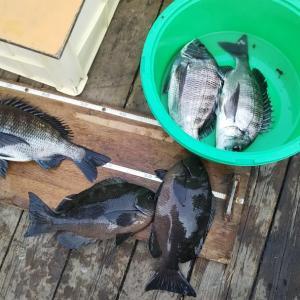 2020年 かかり釣り釣行記録~