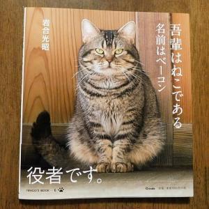 「吾輩は猫である名前はベーコン」岩合光昭