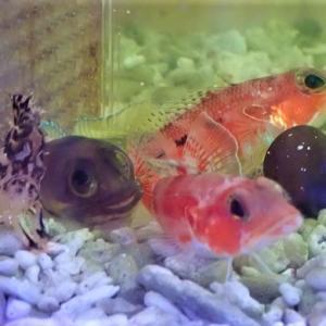 癒される魚たち