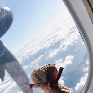 ♡相棒ワンころりん、空の旅♡