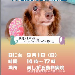 ☆譲渡会のお知らせ 9月1日(日)美しが丘動物病院