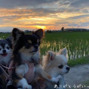 夕日と姉妹たち