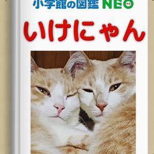 図鑑NEO
