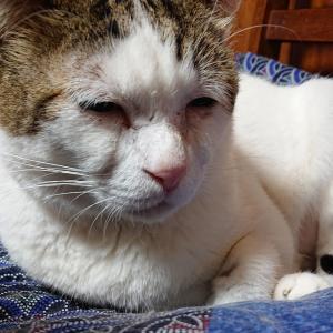 リモート関東猫の会