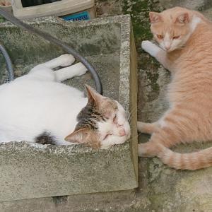 猫の味方くー(追記あり)