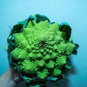 新種野菜のメニューを!