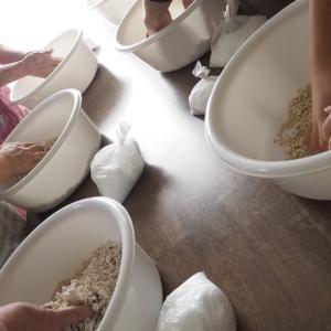 【麦味噌作り教室】今日は麦味噌作り教室を開催!!この寒い時期に仕込む「...