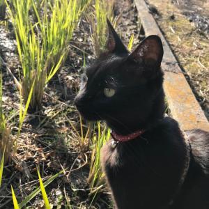 黒猫 ゴロさん (^^)/