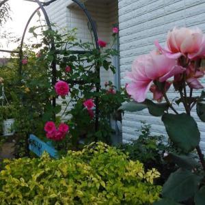 朝散歩と庭仕事