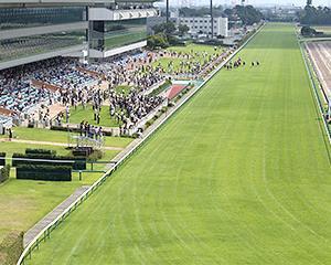梅雨が終わりを迎え夏競馬本番へ!新潟の注目レースを予想いたします。