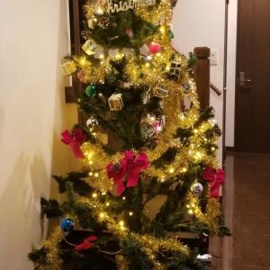 クリスマスツリーを飾ったよ