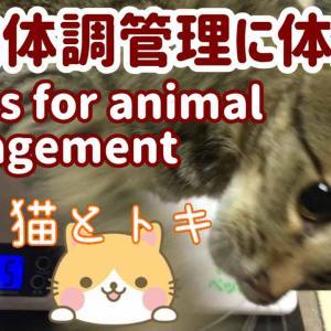 動物の体重管理に体重計 猫用品(猫グッズ)のペット君