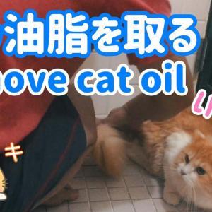 お風呂で猫の油脂汚れを皮脂角質除去クリーム