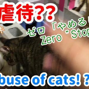 猫の虐待?変態?いじめないで!キジトラ保護猫