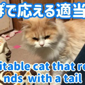 飼い主を尻尾であしらう猫