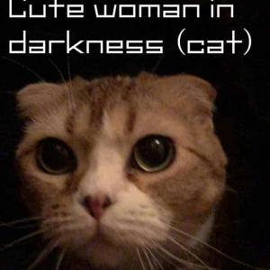 【かわいい猫動画】猫部屋を暗くすると目がクリックリの女の子達が可愛過ぎます^^