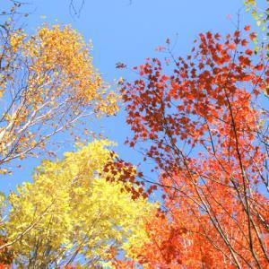 四季のある暮らし・・・紅葉狩りは行かれましたか?