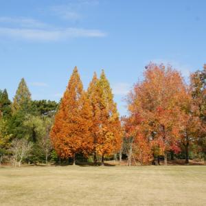 秋の風景散歩