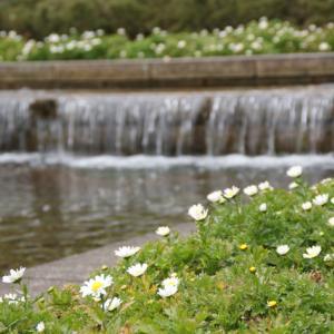 梅の開花が楽しみです・・・