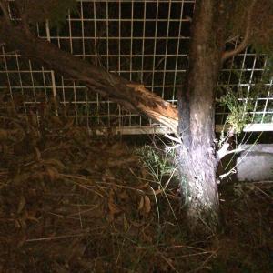 庭の木が少し裂けた台風被害の三重県津市