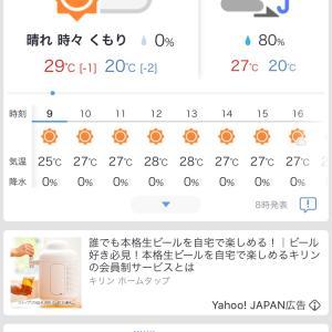 暑い朝☀️朝のめだか達