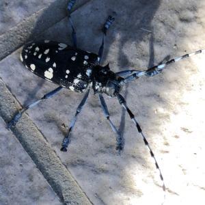 朝カミキリ虫と朝ワムシ