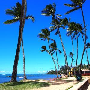 台風接近! エアアジア D71でハワイへ 遅延や欠航の時どうする?