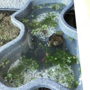 引っ越し完了:庭の整備もしております