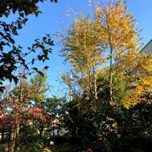 輝く庭と石板敷き