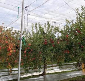 りんご園と井頭公園