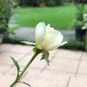 小さな花と空