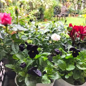 雨で色濃く& 園芸店の新装開店