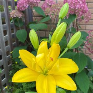 花に見る季節の変化