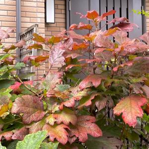 進む秋模様