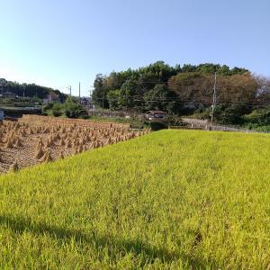 食欲の秋 地場産