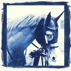 本日のMy注目馬 & ビュイック騎手の活躍に期待!