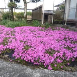 宮崎日日新聞(宮日文芸)川柳