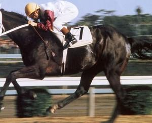本日メイン競走は南関東所属の2歳馬の重賞・ハイセイコー記念【S2】