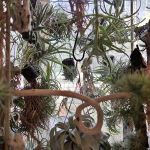 植物の冬越しと悩ましい日々