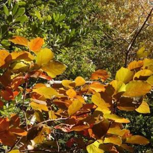 「秋の香貫山散策」沼津