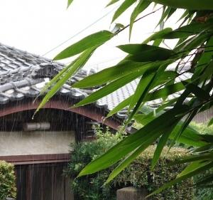「今朝は雨」