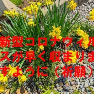 また、二桁の15人感染者数増(北海道)