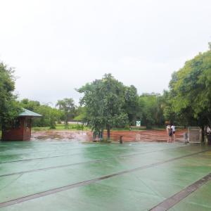 アルゼンチン六日目~イグアスの滝を歩く!
